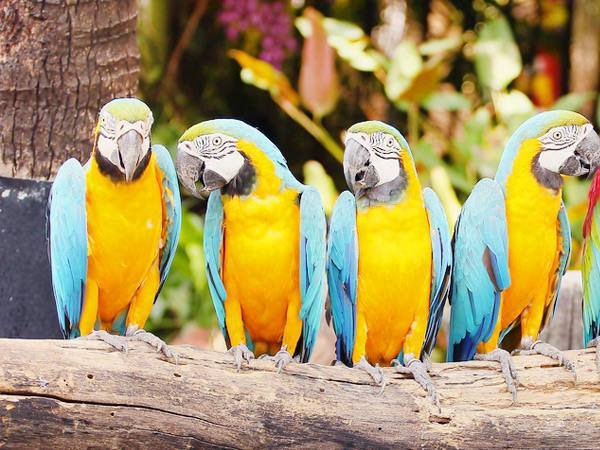 Paphos Zoo Cyprus